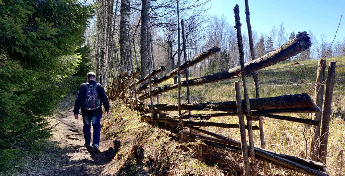 Mies kävelee kansallispuistossa vanhan aidan vieressä.